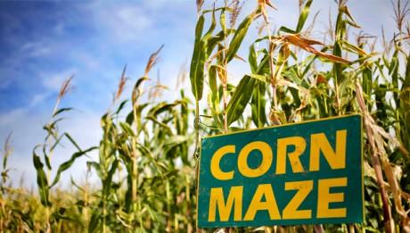 corn-maze1