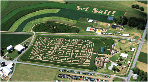 Virginia Toy Novelty Blog Corn Maze Fun With The Entire Family